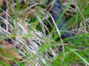 alpencross_2010_0083