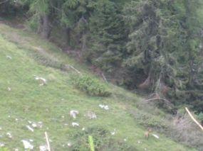 alpencross_2010_0948
