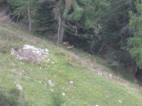 alpencross_2010_0949