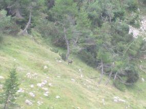 alpencross_2010_0950