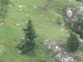 alpencross_2010_0951