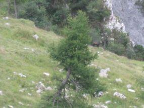 alpencross_2010_0953