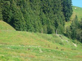 alpencross_2010_0165