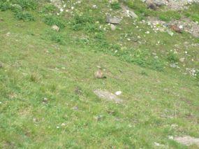 alpencross_2010_0393