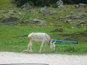 alpencross_2010_0742